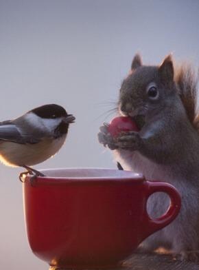 אוגר וציפור שותים תה