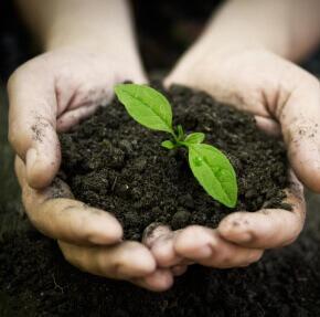 ידיים מחזיקות אדמה וצמח